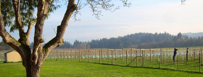 Ten Reasons To Visit B C Wineries And Distilleries This